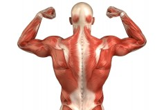 Steroids for gaining muscle mass